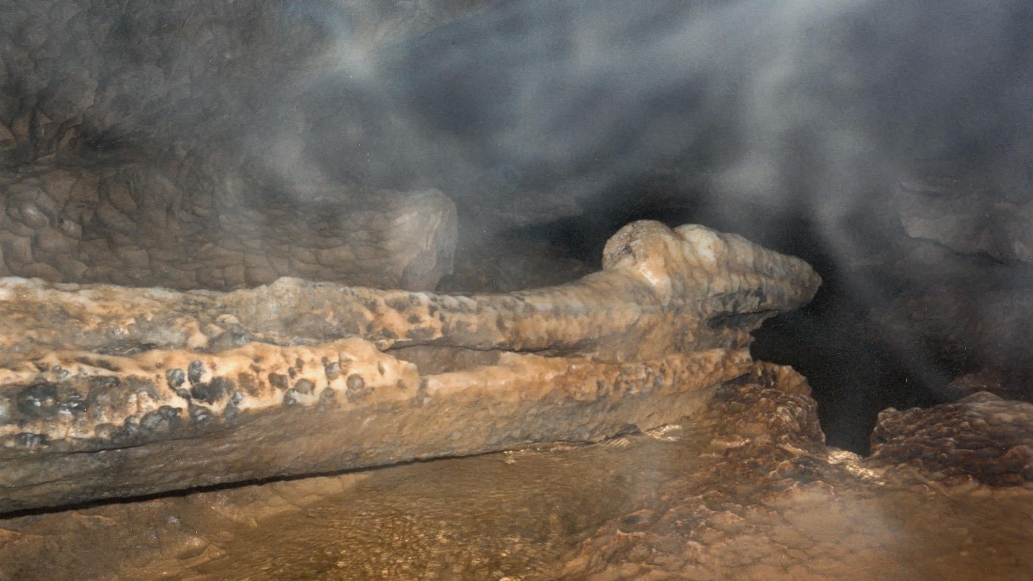 Ein Bild des unzerstörten Krokodils